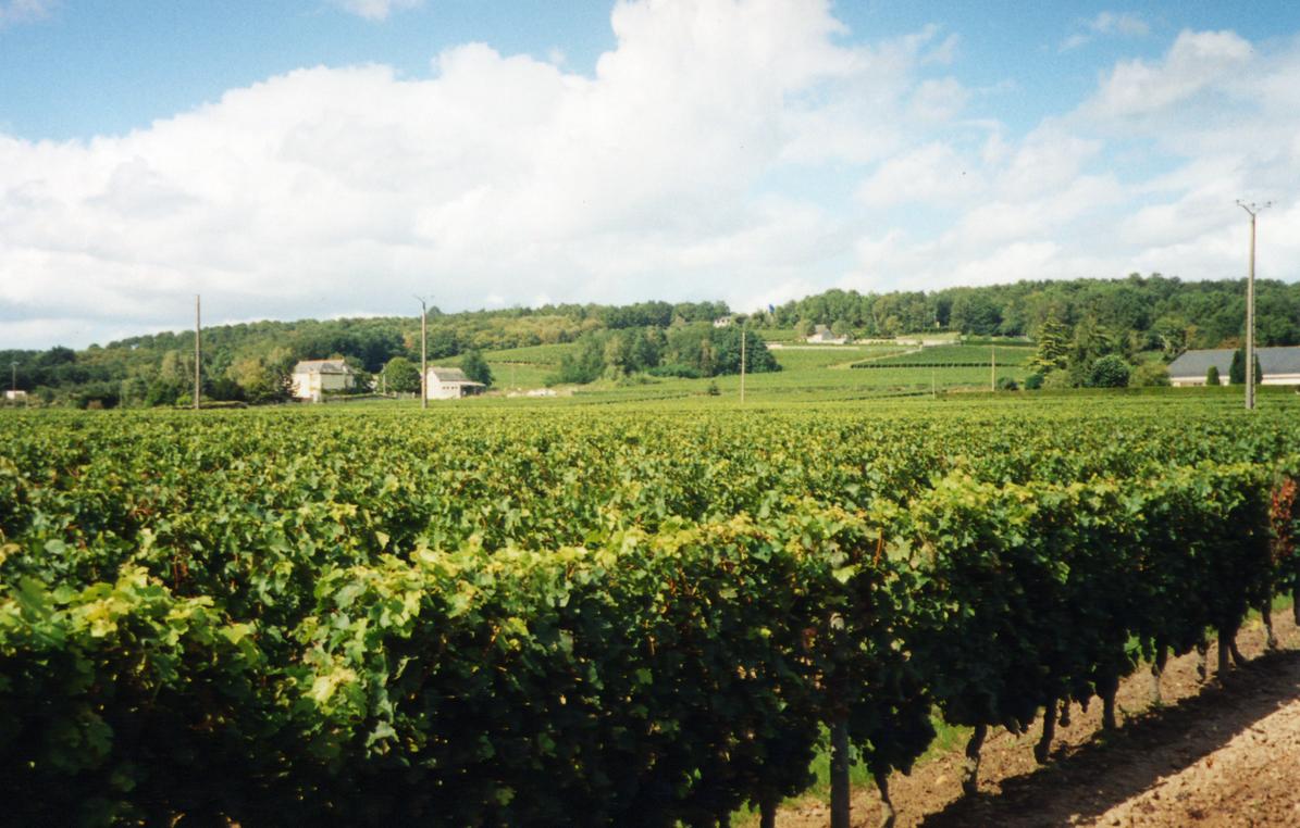 GRAND-CLOSDomaine-de-la-lande-vin-de-bourgueil-et-saint-nicolas-de-bourgueil